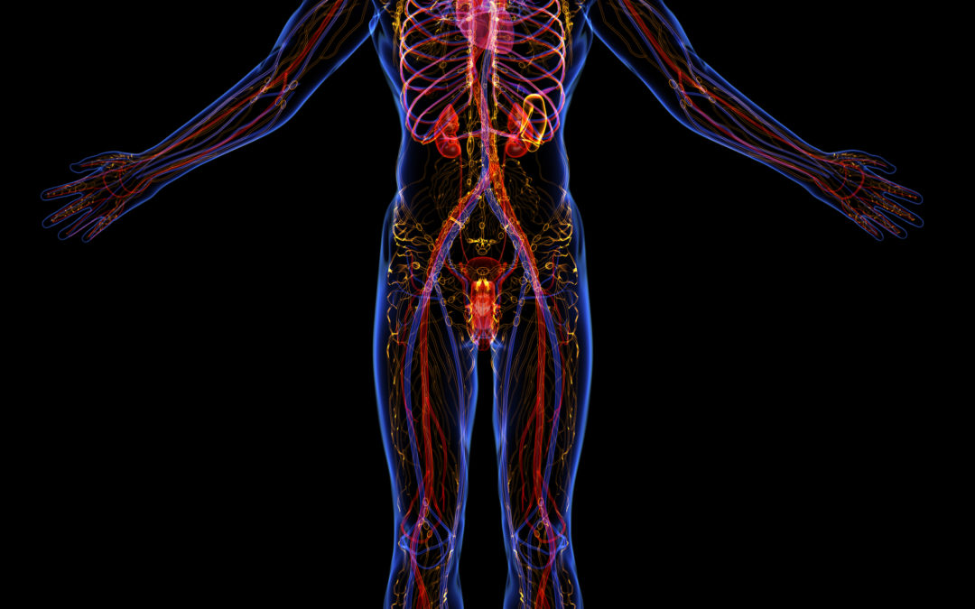 Supplements that Improve Blood Flow and Circulation