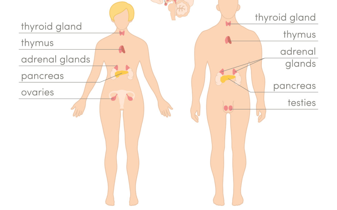 Essential Oils Supporting a Healthy Endocrine System